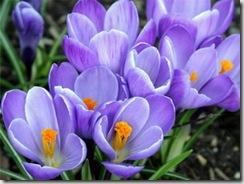 поздравления с 8 марта, стихи к 8 марта, смс поздравления, международный женский день